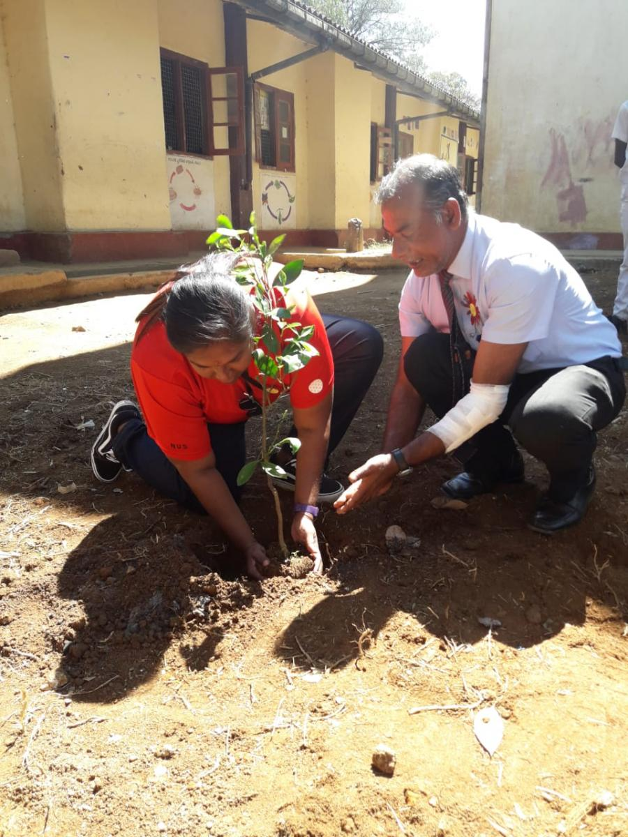Helping to plant trees at the school