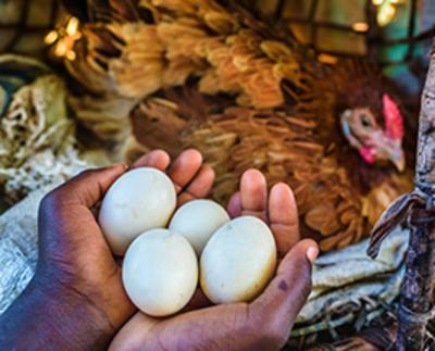 Philippines 6 chickens a share of training world vision singapore philippines 6 chickens a share of training negle Images
